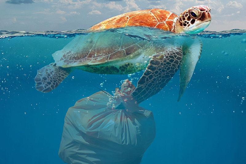 kies-entsorgung schildkröte schwimmt mit Müllsack im Wasser